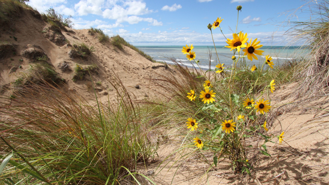 Late summer dune. Photo credit: Pete Doherty