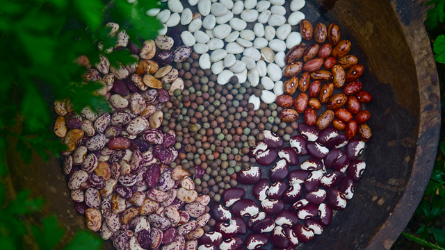 John Coykendall has been preserving seeds for more than 40 years