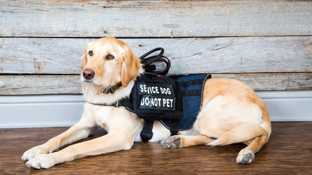 K9s for Warriors pairs service dogs with American veterans suffering from PTSD