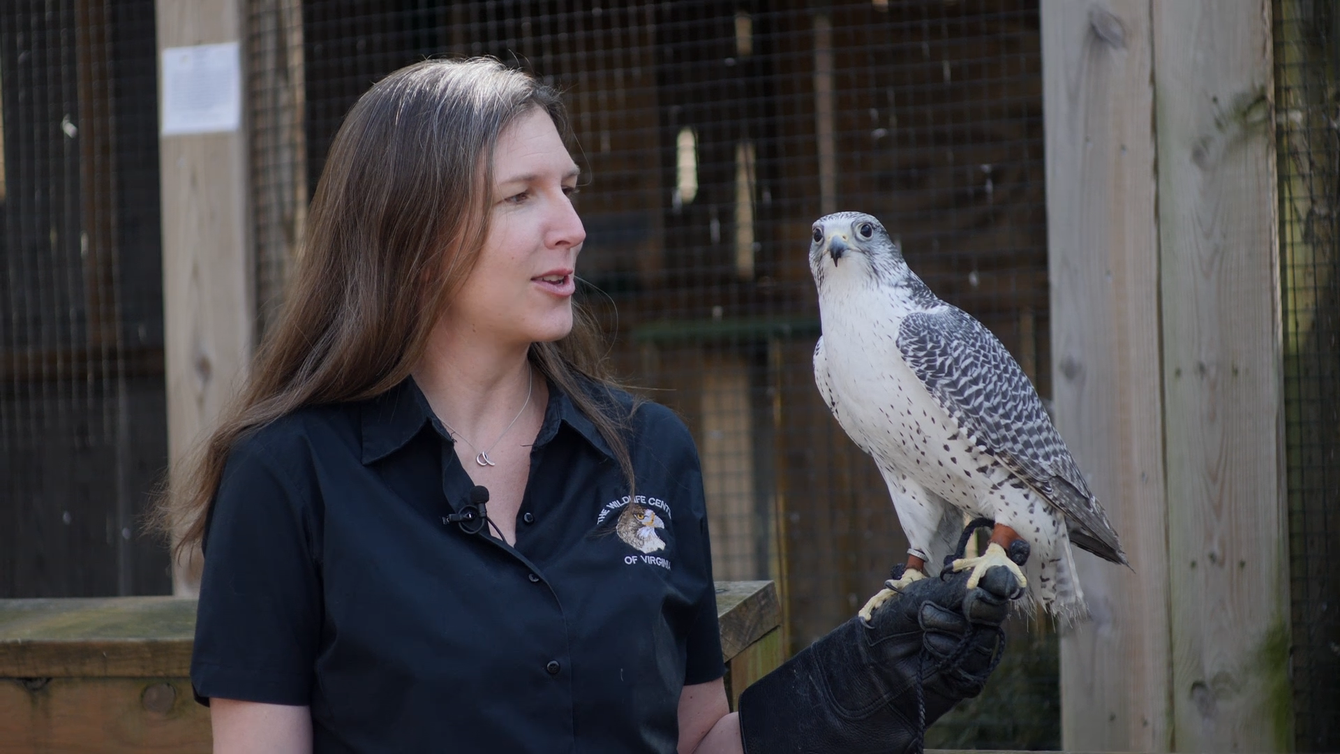 Learn about wildlife from black bears and eagles to turtles, opossums and vultures